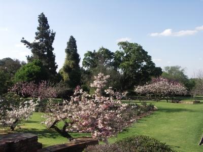 Botanical Gardens in Johannesburg